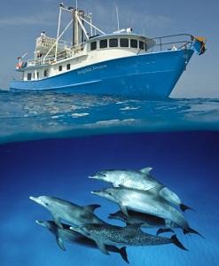 Они спасают людей и проводят корабли через рифы